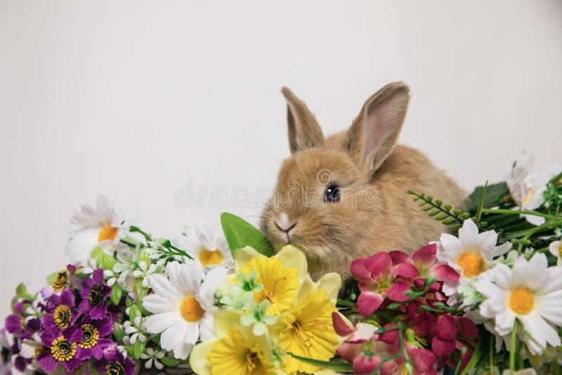 Nettes Kaninchen mit Blumen stockfotografie