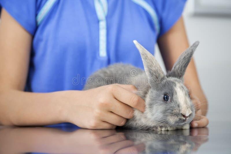 Nettes Kaninchen mit Mädchen in der Klinik lizenzfreie stockbilder