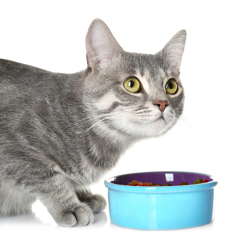 Nettes Katzeessen lizenzfreies stockfoto