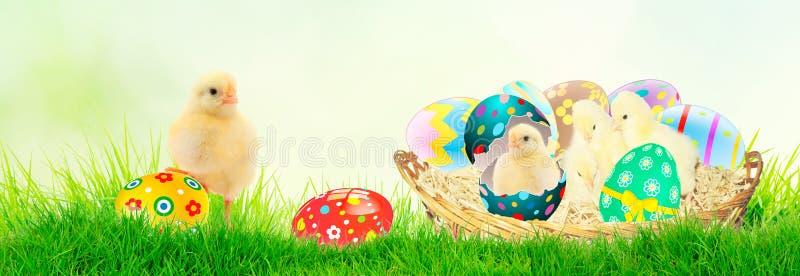 Nettes kleines Huhn, welches aus das Osterei im Gras auf te Frühlingshintergrund herauskommt lizenzfreie stockfotos