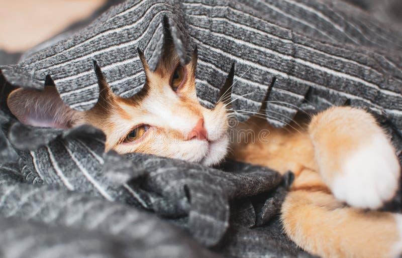 Nettes kleines Ingwerkätzchen, das in der grauen Decke schläft lizenzfreie stockfotos