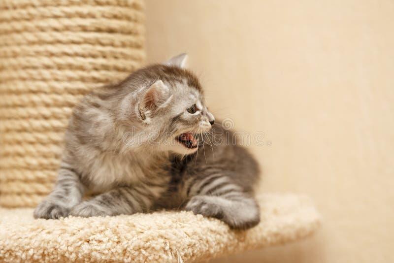 Nettes kleines Kätzchen stockfoto