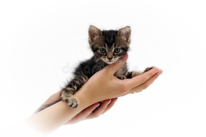 Nettes kleines Kätzchen, das auf den Palmen 2 sitzt lizenzfreie stockbilder