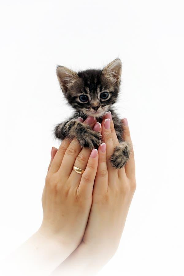 Nettes kleines Kätzchen, das auf den Palmen 4 sitzt stockfotografie
