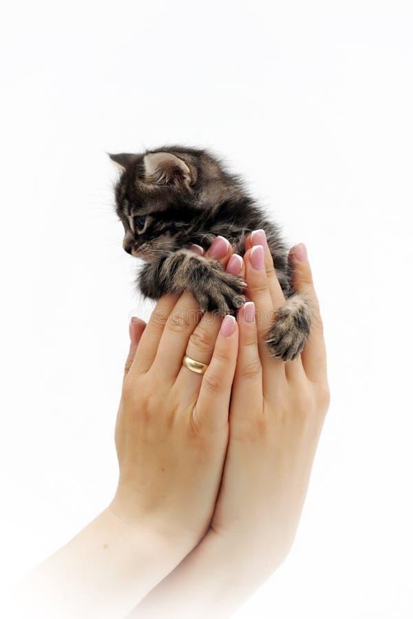 Nettes kleines Kätzchen, das auf den Palmen 3 sitzt lizenzfreie stockbilder