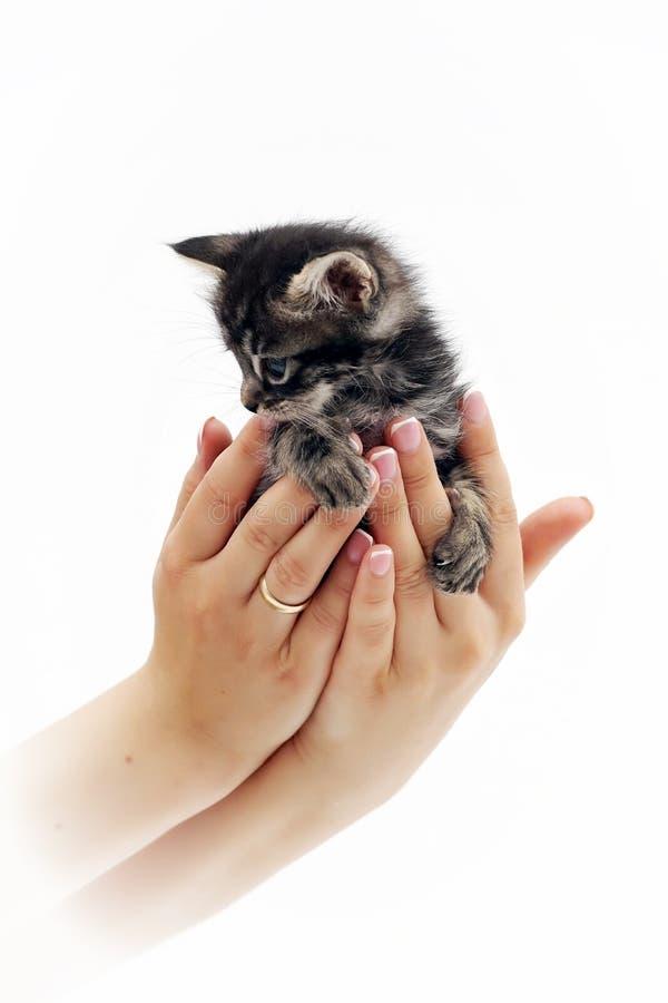 Nettes kleines Kätzchen, das auf den Palmen 6 sitzt lizenzfreies stockfoto