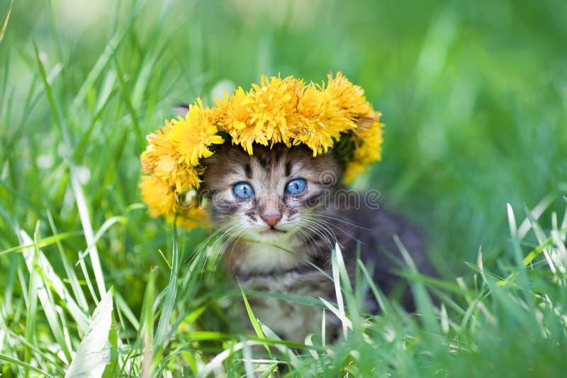 Nettes kleines Kätzchen krönte mit einem Chaplet des Löwenzahns lizenzfreies stockfoto