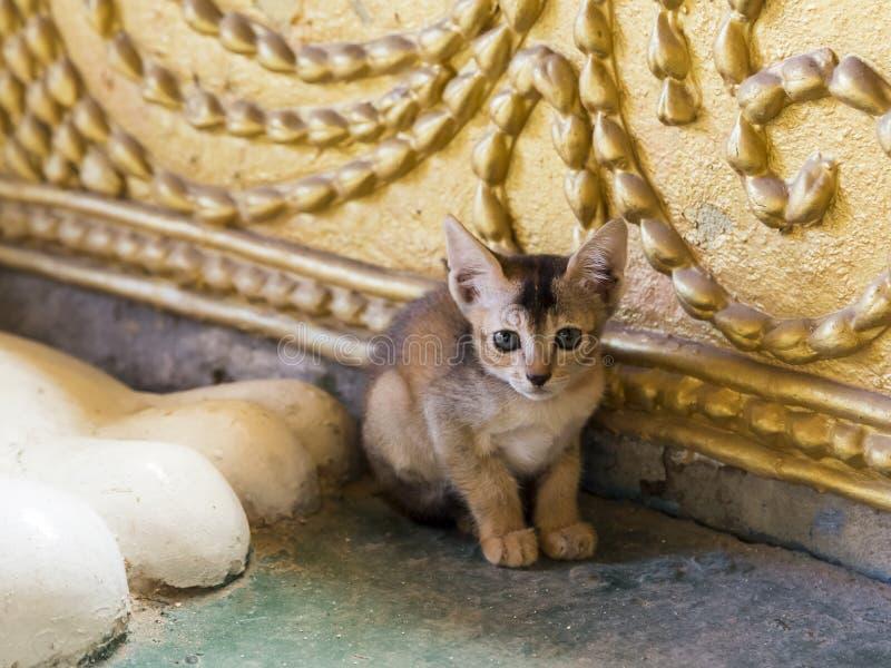 Nettes kleines Kätzchensitzen transfixed nahe bei Riese Buddha-Fuß lizenzfreies stockfoto