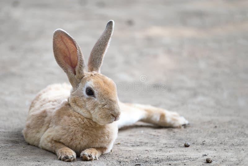 Nettes kleines Kaninchen lizenzfreie stockfotos