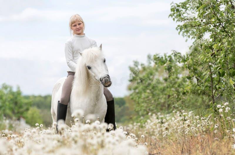 Nettes kleines Mädchen, das ein weißes die Shetlandinseln-Pony einzieht stockfotografie