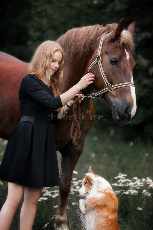 Nettes kleines Mädchen, das großes rotes Zugpferd und kleinen Hund durch den Wald im Sommer führt stockbilder