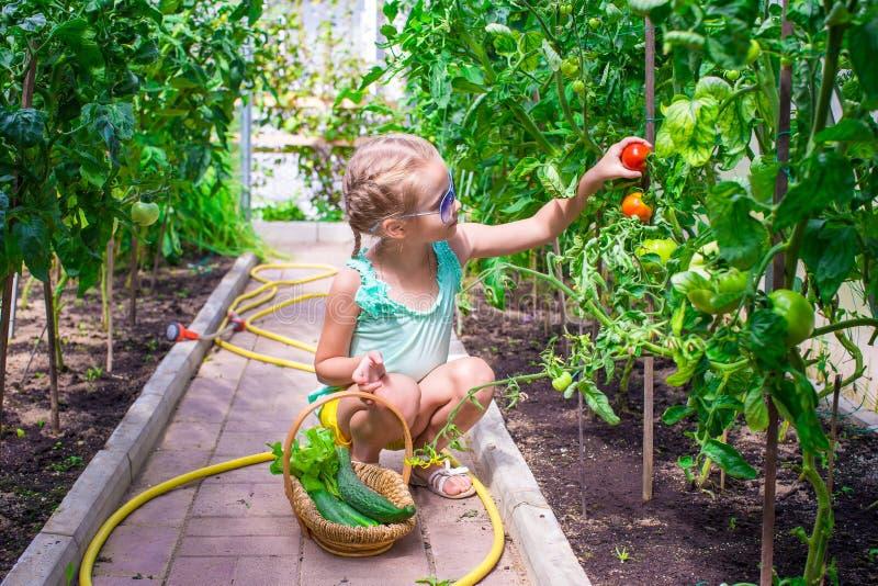 Nettes kleines Mädchen sammelt Erntegurken und lizenzfreie stockfotos