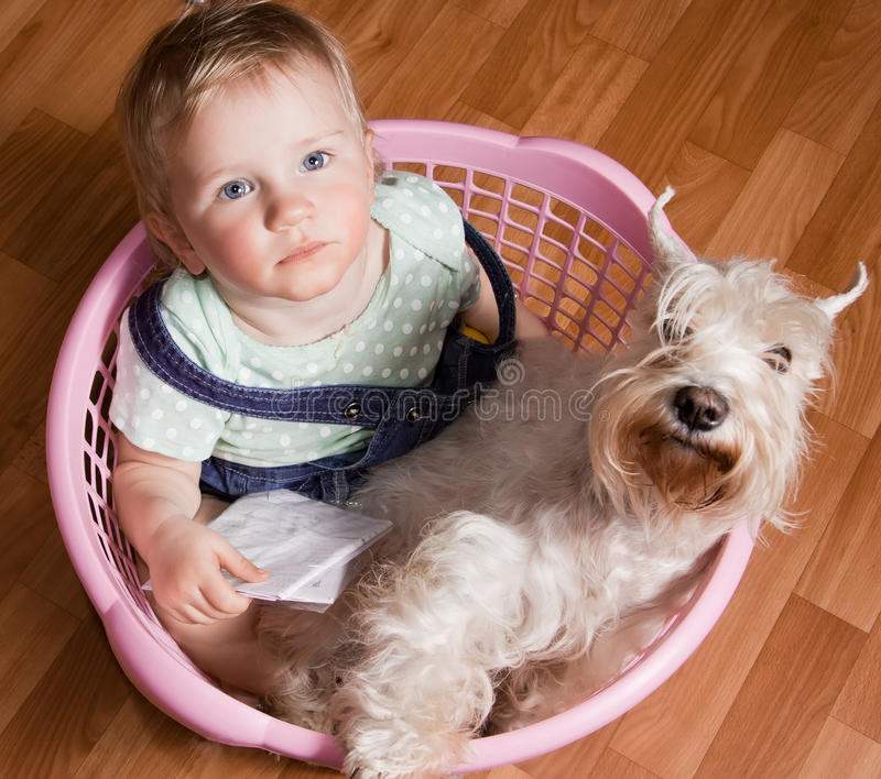 Nettes kleines Mädchen und weißer Hund in einem Korb. stockbild
