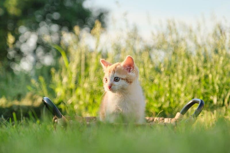 Nettes kleines rotes flaumiges Kätzchen im Korb auf grünem sonnigem Gras lizenzfreie stockbilder
