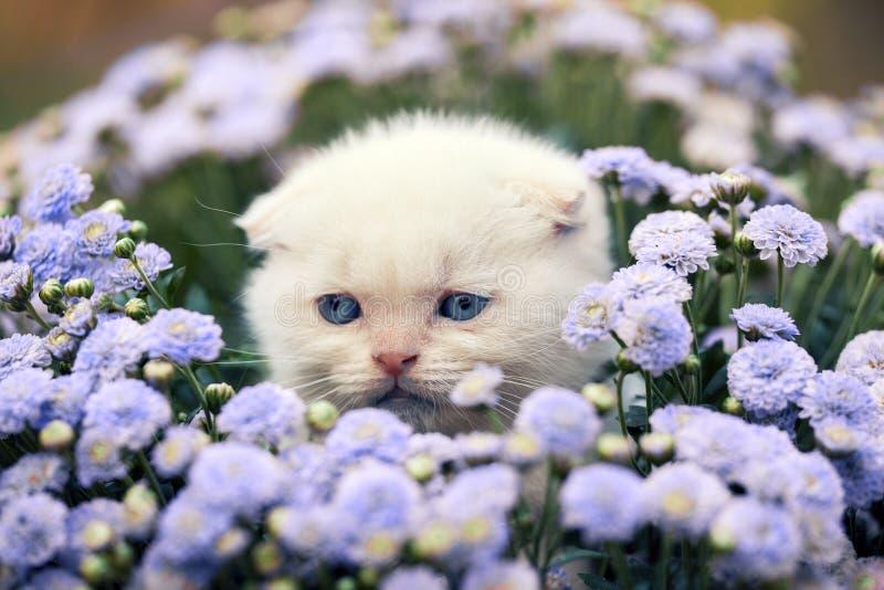 Nettes kleines weißes Kätzchen, das in der Blume sitzt lizenzfreie stockfotografie
