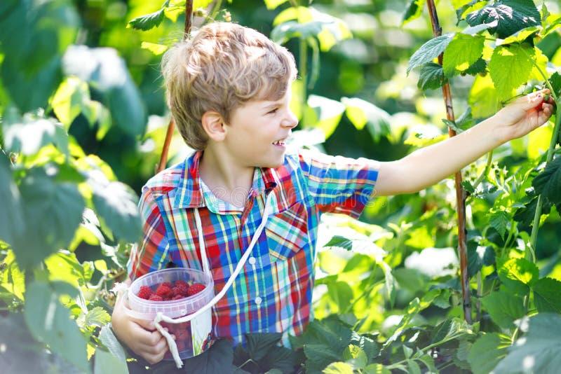 Nettes Kleinkind, das frische Beeren auf Himbeerfeld auswählt Gesundes Lebensmittel der Kinder-Auswahl auf Biohof Kleiner Kleinki stockfotos