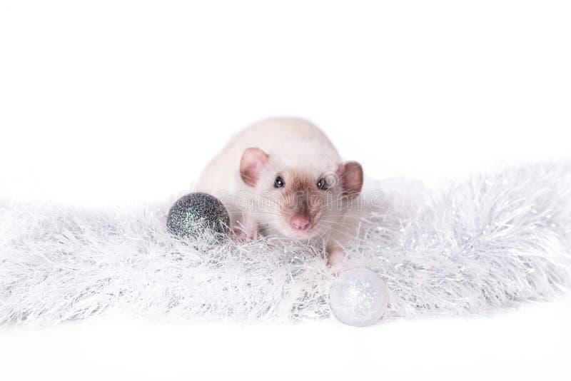 Nettes Nagetier sitzen in den silbernen Weihnachtsdekorationen -, die auf weißem Hintergrund lokalisiert werden stockfotos