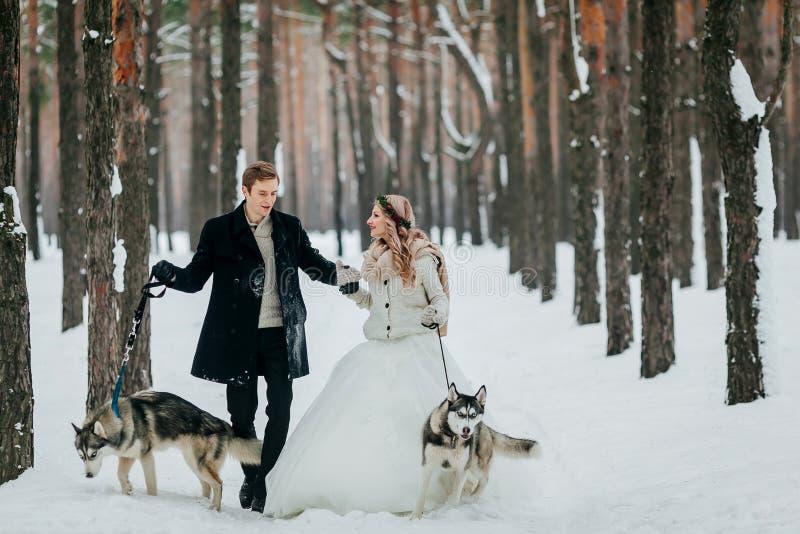 Nettes Paar geht auf die Spur im schneebedeckten Wald mit zwei sibirischen Hunden Braut und Bräutigam draußen gestaltungsarbeit stockbilder