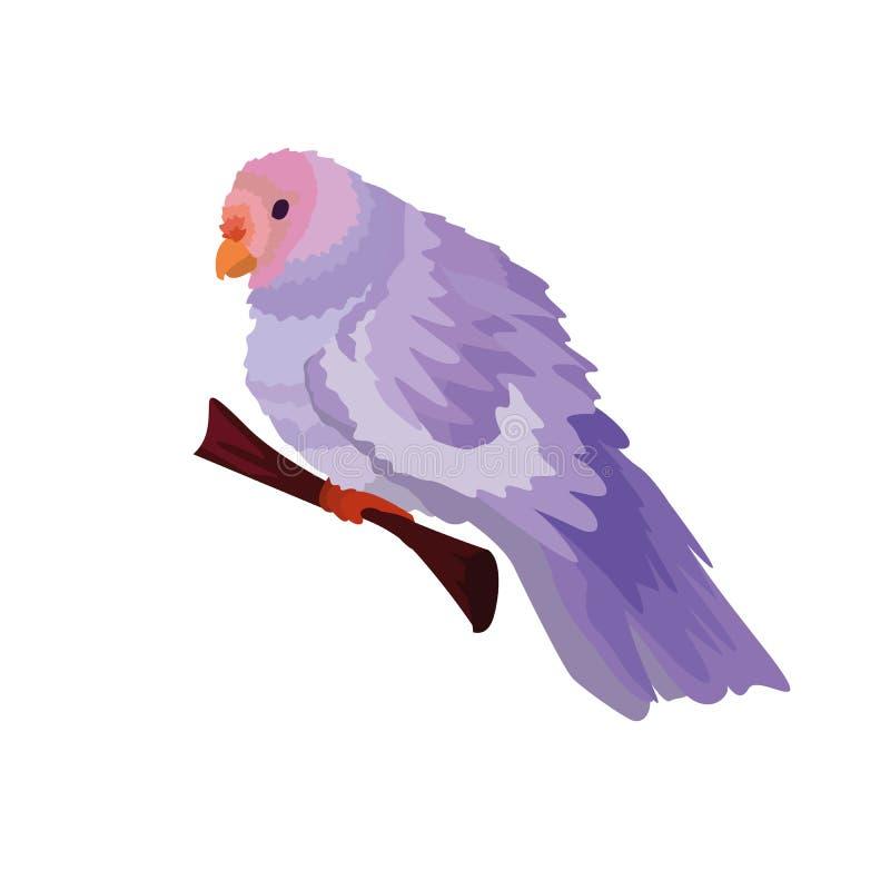Nettes Papageienfarbpurpur Vektor, esp10 lizenzfreie abbildung