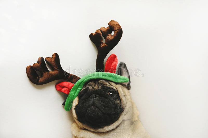Nettes Pugporträt in den Weihnachtshörnern stockbilder