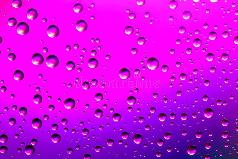 Nettes Rosa und purpurroter Steigungsfarbhintergrund von den Wassertropfen der unterschiedlichen Größe Abstrakter Wassertröpfchen stockbild