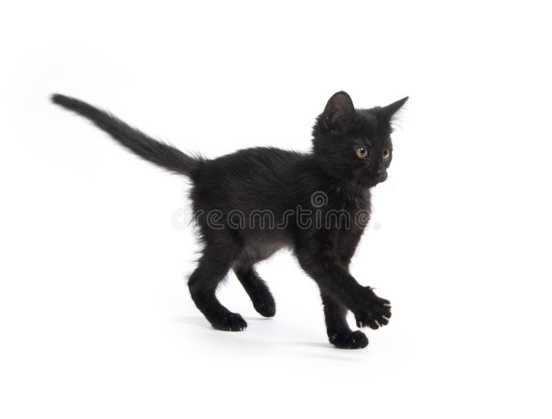 Nettes schwarzes Kätzchen auf Weiß stockfoto