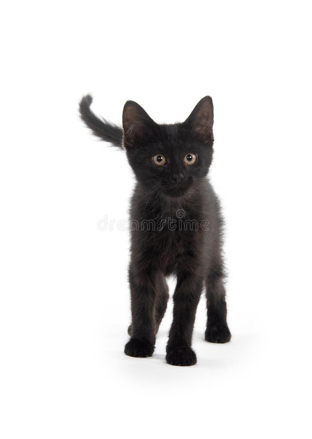 Nettes schwarzes Kätzchen auf Weiß stockbild