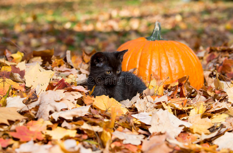 Nettes schwarzes Kätzchen und Blätter stockfoto