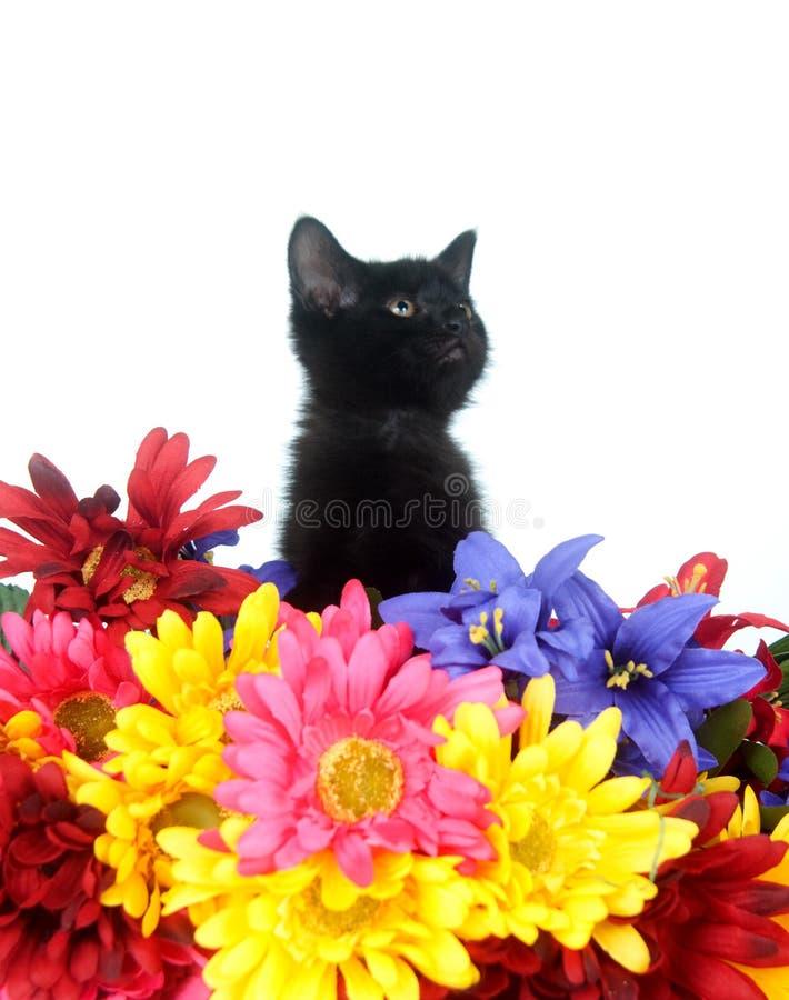 Nettes schwarzes Kätzchen und Blumen stockbilder