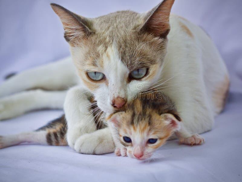 Nettes Spielen des Kätzchens stockfotografie