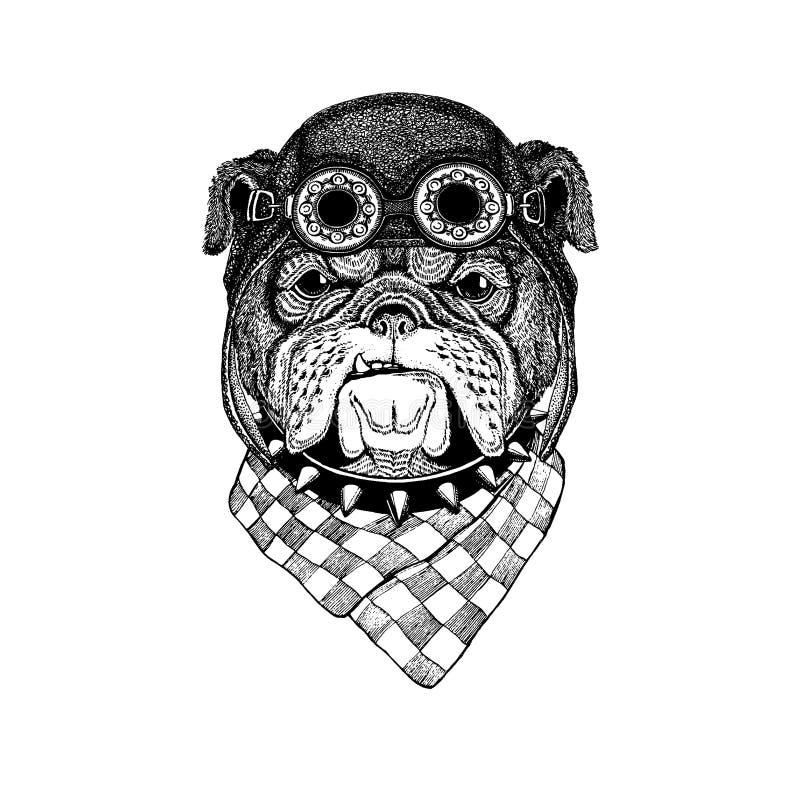 Nettes tragendes Tiermotorrad, gezeichnetes Weinlesebild Fliegersturzhelm Bulldogge Hand für T-Shirt, Tätowierung, Emblem, Auswei lizenzfreie abbildung