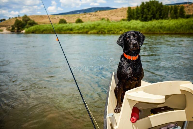 Nettes wachsames schwarzes Labrador-Reiten in einem Boot lizenzfreie stockfotos