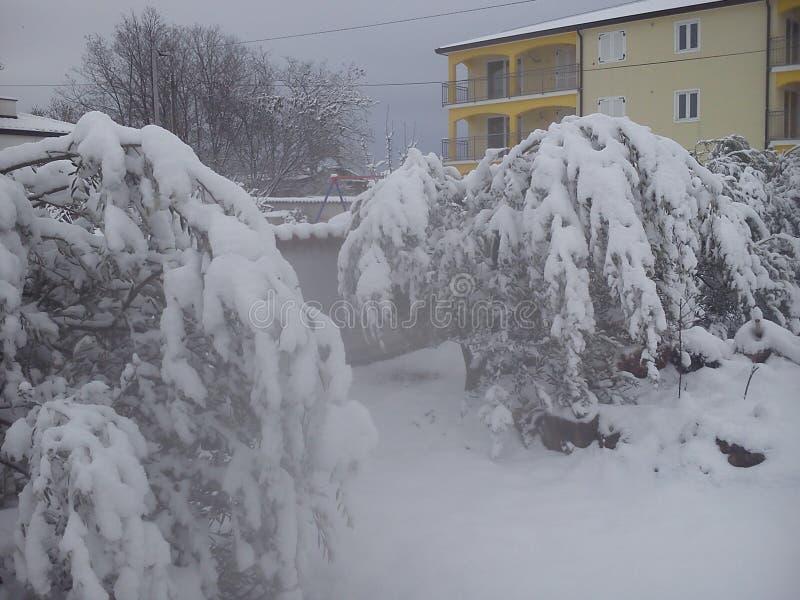 Nettester Winter stockfotos