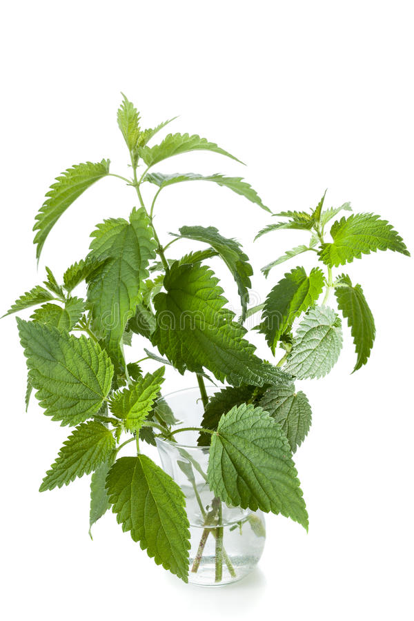 Download Nettle stock photo. Image of backgrounds, eating, green - 27011742