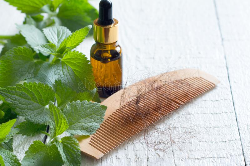Nettle and cure of loss hair alternative medicine concept royalty free stock photo