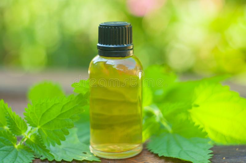 Nettle essential oil in beautiful bottle on table stock photography