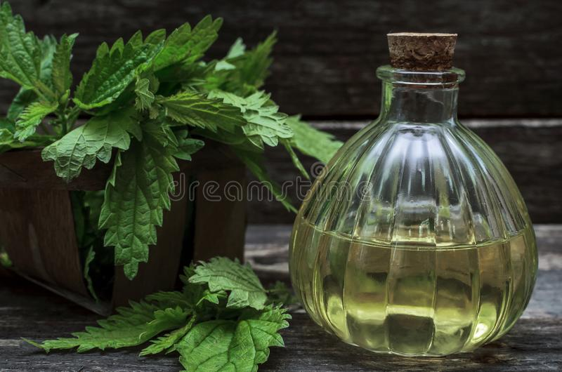 Nettle leaves tincture essential oil. stock photography