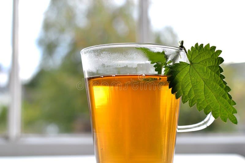 Nettle herbal tea. A glass of nettle herbal tea sat on a beautiful window backdrop royalty free stock image