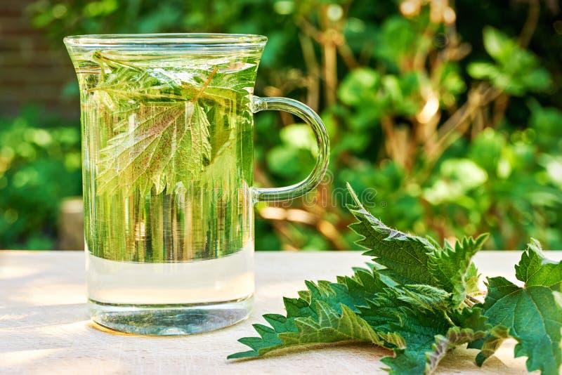 Nettle leaves in a glass of nettle tea on a wooden table. Fresh herbal nettle tea. Green nettle leaves in a glass in a garden on a wooden table with fresh leaves stock photos