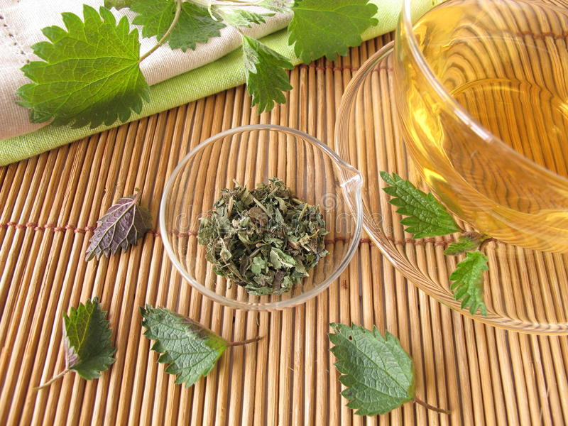 Nettle tea. A cup of fresh nettle tea stock photo