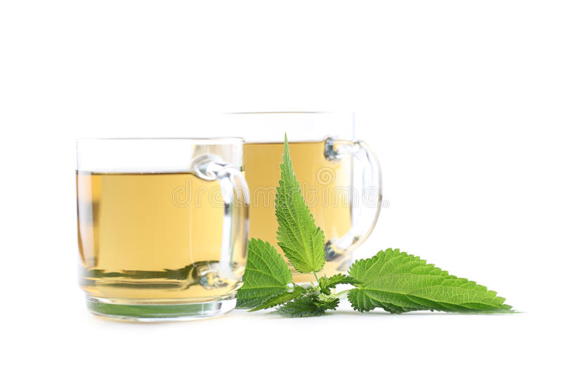 Nettle tea. Nettle and freshly made nettle tea in glass cups isolated on white background. Shallow dof, focus on nettle royalty free stock photo