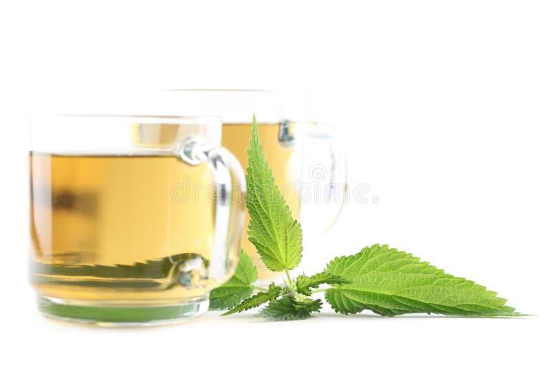Nettle tea. Nettle and freshly made nettle tea in glass cups on white background. Shallow dof, focus on nettle stock photo
