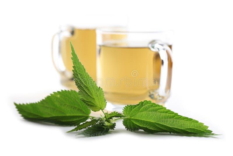 Nettle tea. Nettle and freshly made nettle tea in glass cups on white background. Shallow dof, focus on nettle royalty free stock image