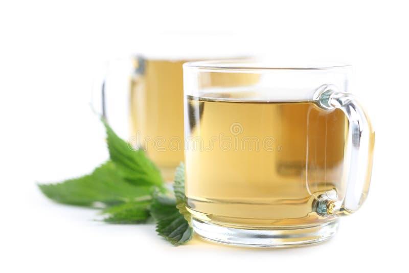 Nettle tea. Nettle and freshly made nettle tea in glass cups on white background. Shallow dof royalty free stock photos