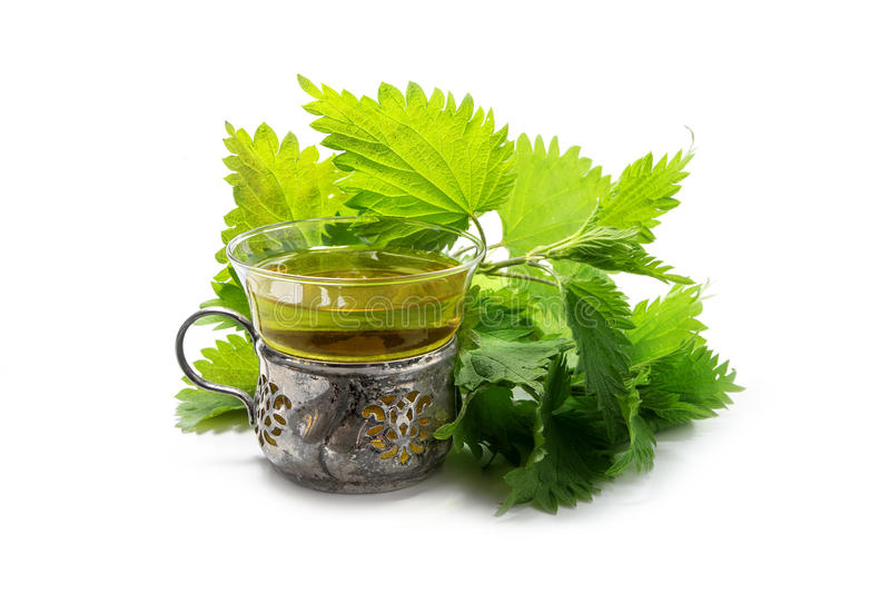 Nettle tea in a cup of glass and silver, fresh branches and leaves isolated with shadow on a white background, a medicinal herb f. Nettle tea in a cup of glass stock photography