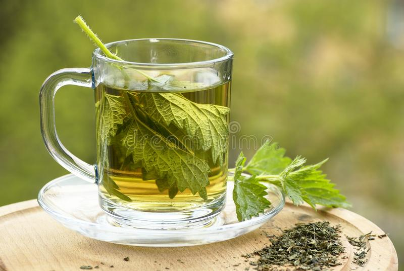 Nettle tea. In glass, fresh and dry nettle stock photo