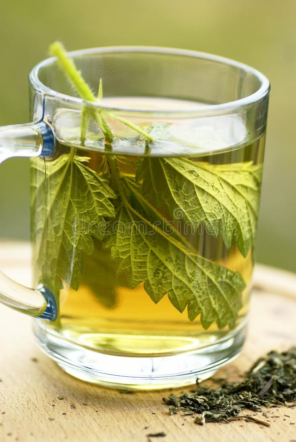 Nettle tea. In glass. Fresh and dry stinging nettle royalty free stock image