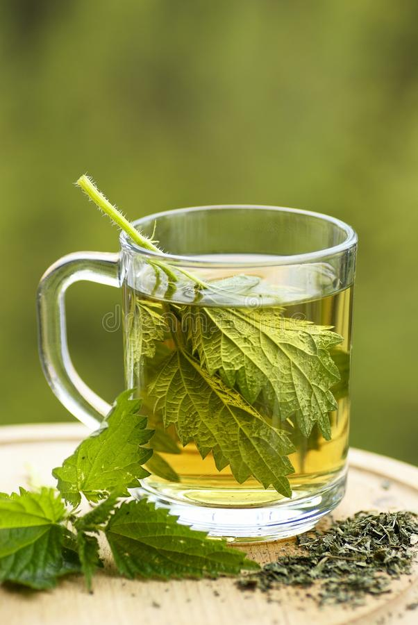 Download Nettle tea stock photo. Image of drink, nettle, leaf - 32748906