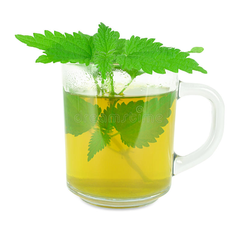 Nettle tea. In a glass on a white background stock image