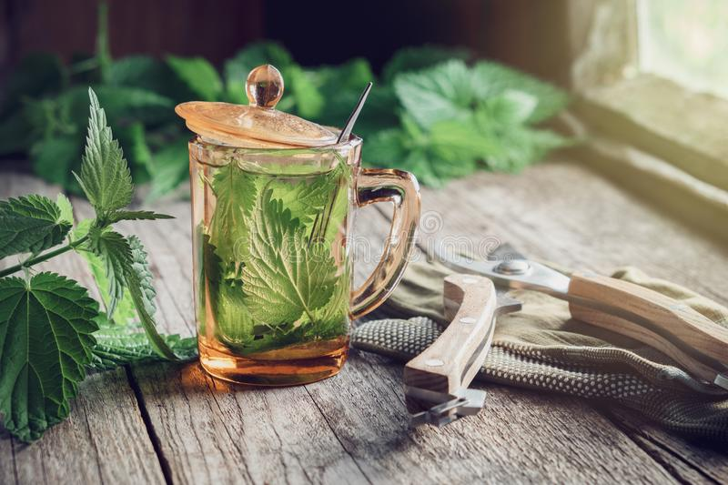 Nettle tea or infusion, nettle plants and garden pruner on wooden table. stock photo
